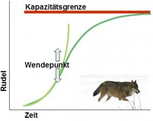 Abb. 3.  Keine Population wächst in den Himmel. Nach einem steilen Anstieg wendet die Kurve und pendelt sich an der Kapazitätsgrenze des Lebenraums ein