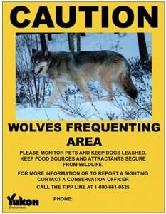Mit solchen Warntafeln machte der Wildlife Service im Yukon die Stadtbevölkerung auf die Wölfe aufmerksam.
