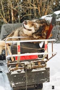 Einnahmequelle Wolf?